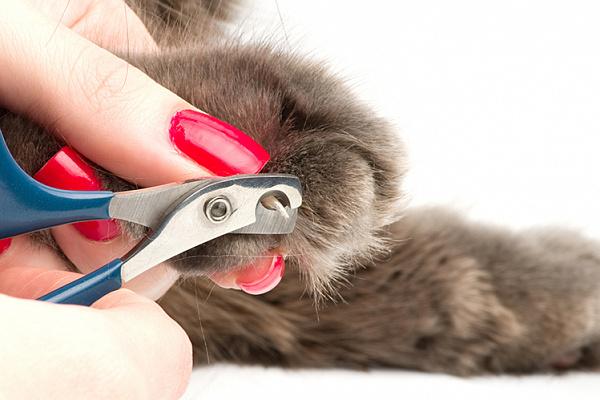 Чим підстригати когті у котів