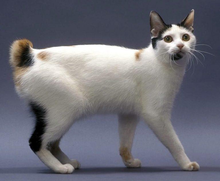 Скільки живуть вуличні коти