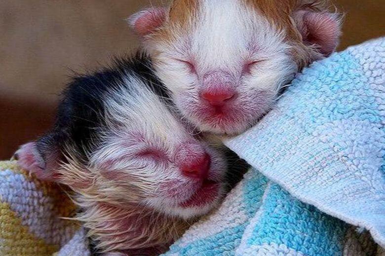 Новонароджені кошенята