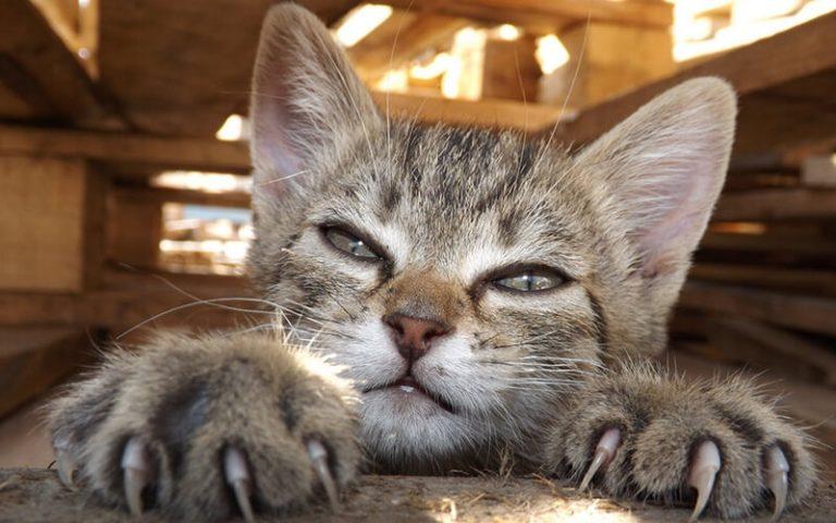 як підстригати когті у котів