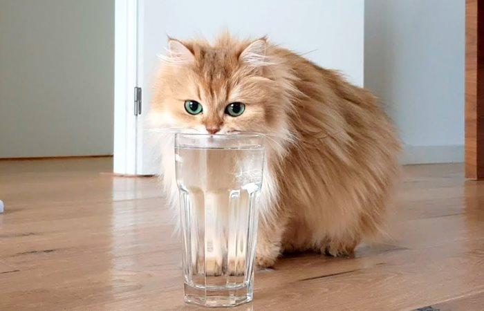 Кіт не хоче пити воду